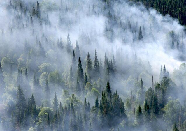 Feu de forêt