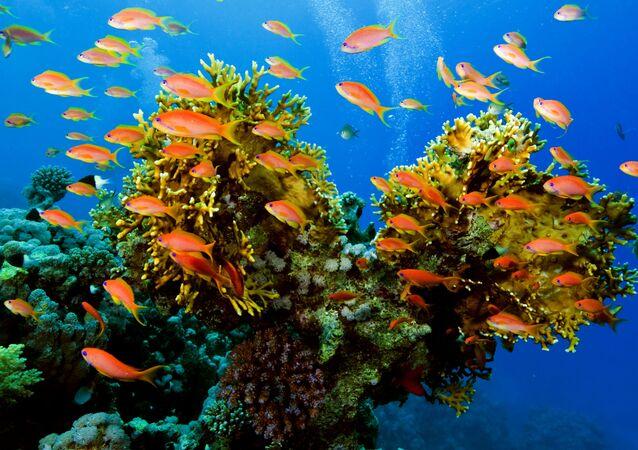 Biodiversité marine (image d'illustration)