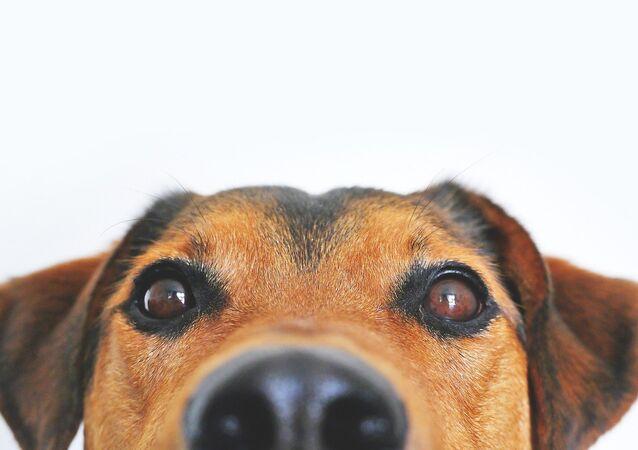Un chien croisé