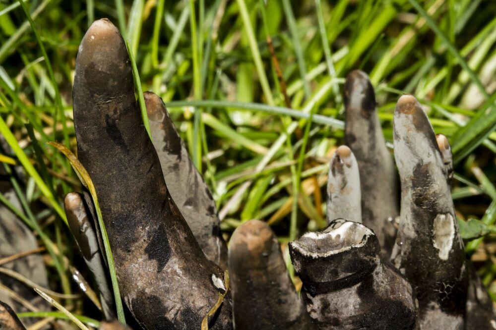 Le champignon Xylaria polymorpha (Doigt noir)