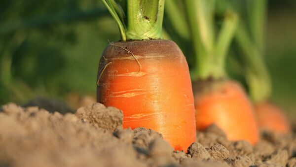 carottes - Sputnik France