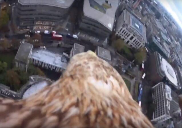 Excursion à dos d'aigle dans le ciel de Londres