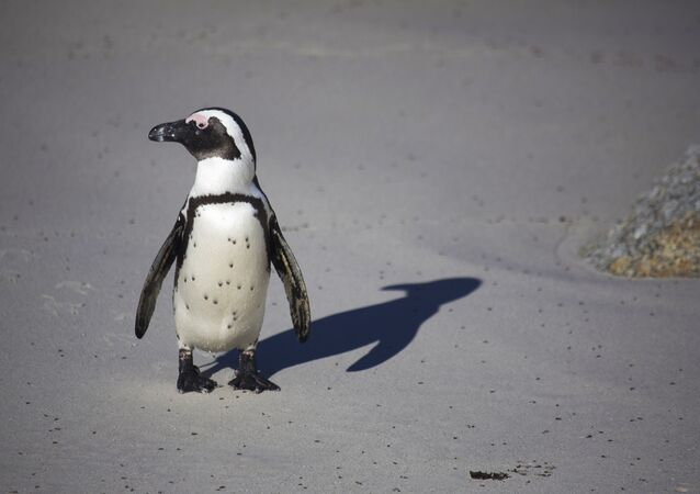 Un pingouin