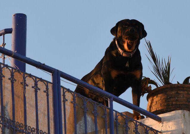 Собака охраняет жилой дом