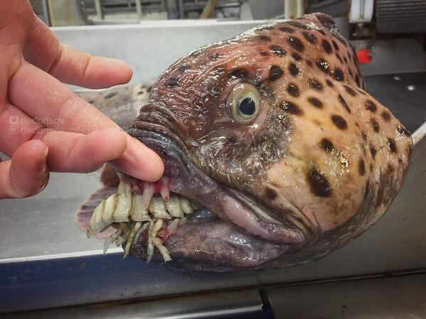 Découvrez ces fabuleux êtres marins des profondeurs - Sputnik France