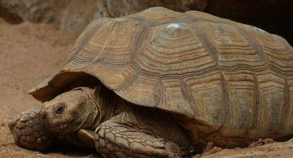 Une tortue (image d'illustration)