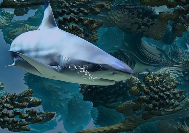 Un requin / image d'illustration