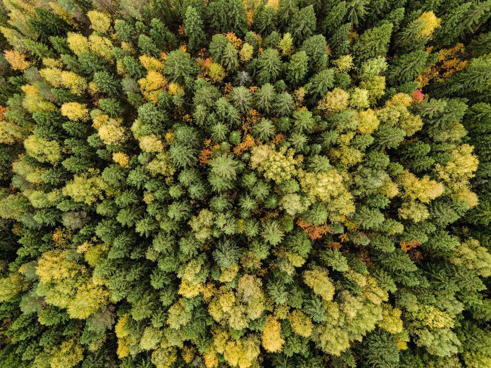 L'automne en Russie, une saison magique!