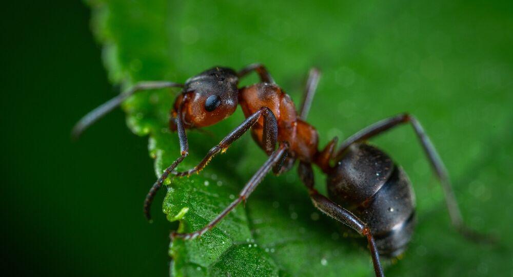 Un fourmi