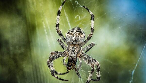 araignée - Sputnik France