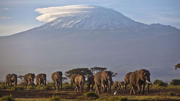 Стадо слонов на фоне горы Килиманджаро, Кения - Sputnik France