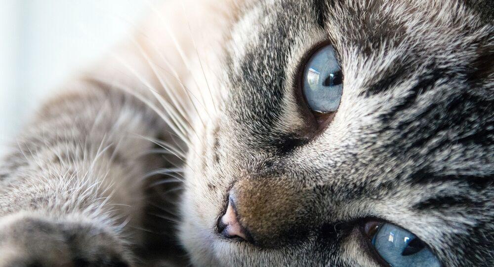 chat (image de démonstration)