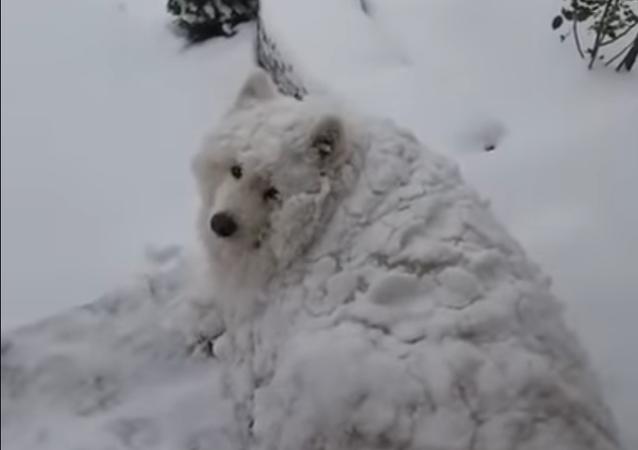 Est-ce la neige qui bouge ou un chien?