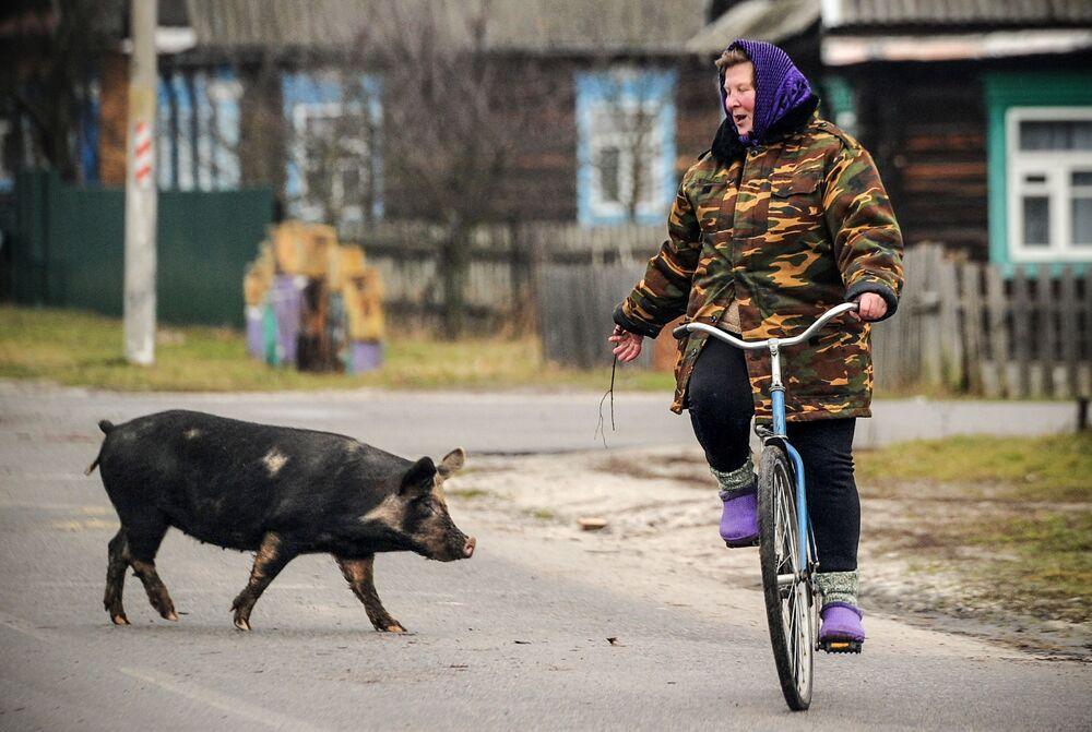 Cette année sera particulièrement propice à ceux qui sont nés pendant l'année du Cochon. Sur la photo: le village de Tonej, en Biélorussie
