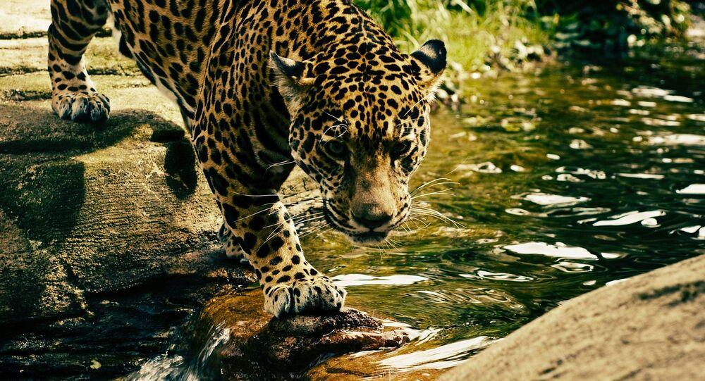 Un léopard (image d'illustration)