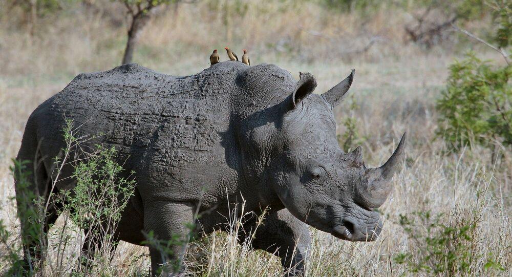 Un rhinocéros (image d'illustration)