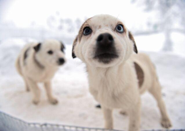 Un chiot et la neige