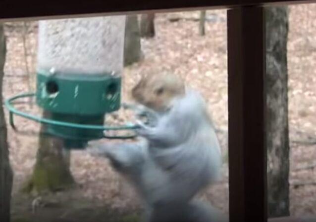 Ce moment amusant où un écureuil tourne autour d'une mangeoire