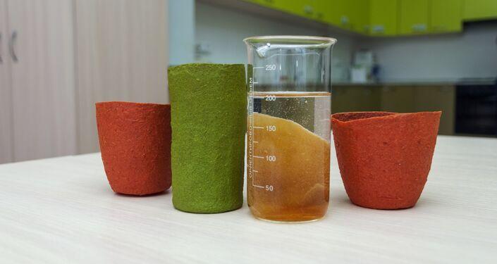 La vaisselle comestible, créé à l'Université technique d'État de Samara