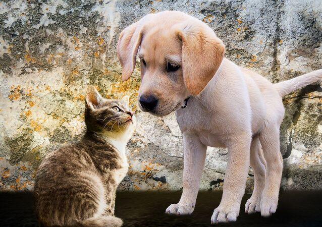 Un chat et un chien (image d'illustration)