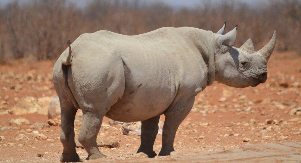 Un rhino
