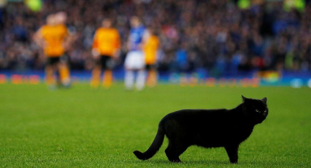 Un chat noir débarque en plein match de football