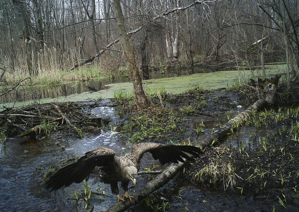 Des animaux sauvages qu'on peut rencontrer à Tchernobyl