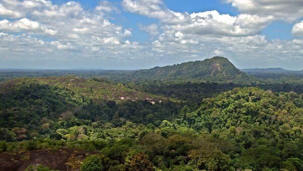 Forêt amazonienne - Sputnik France