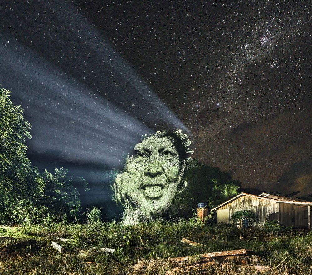 Les mille visages de l'arbre