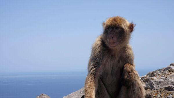 Un singe (image d'illustration) - Sputnik France