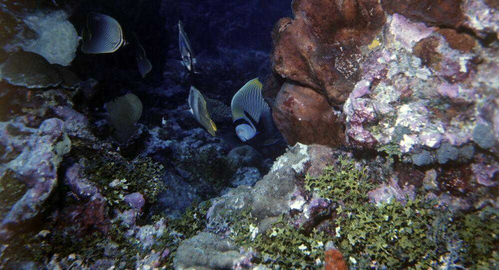 Récif corallien (image d'illustration)