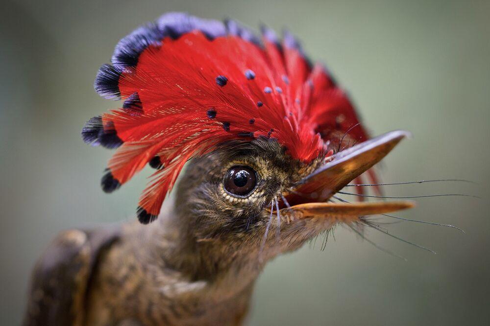 Les oiseaux les plus fantastiques du monde