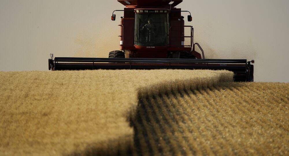 Un champ de blé (image d'illustration)