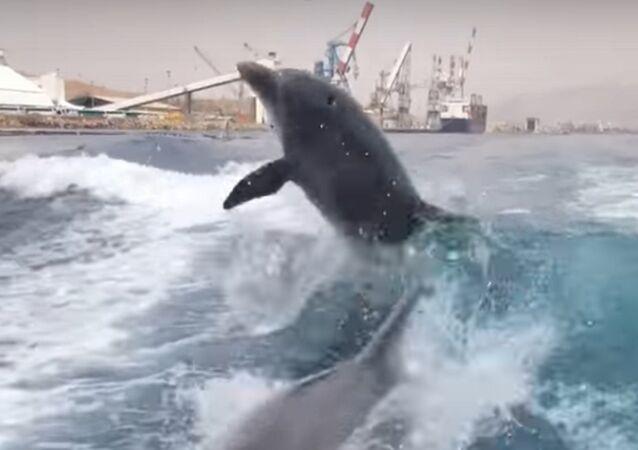 Une promenade en mer pleine d'adrénaline: deux dauphins suivent un hors-bord