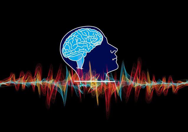 Cerveau / image d'illustration