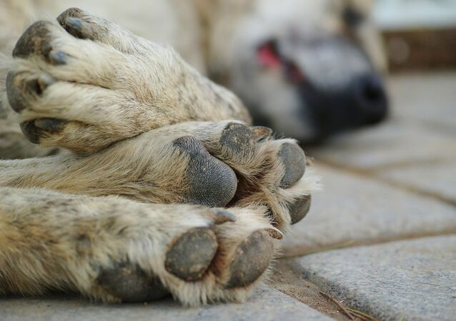 Pattes d'un chien