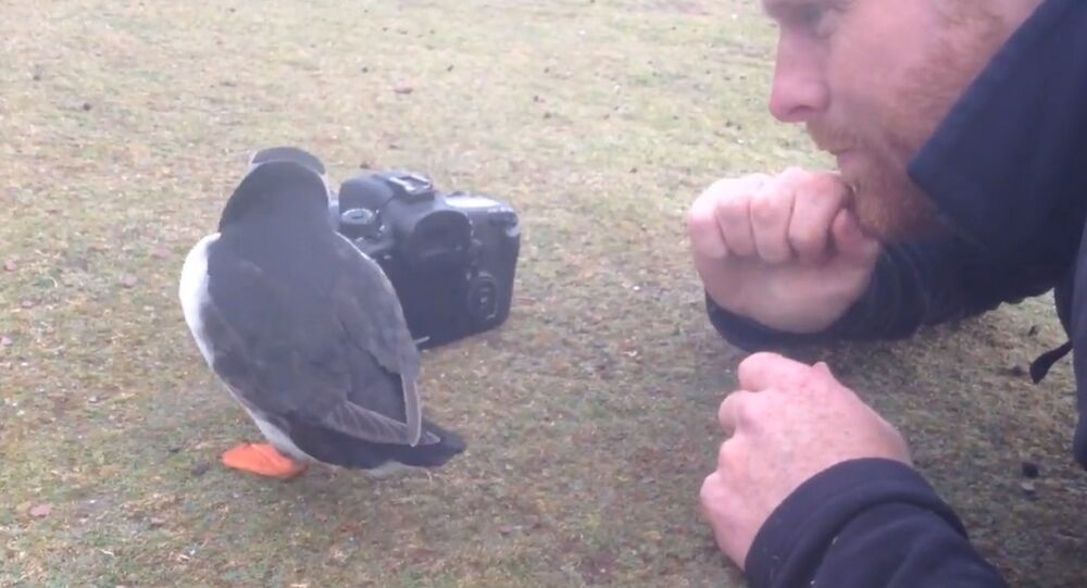 When the puffins become the photographers