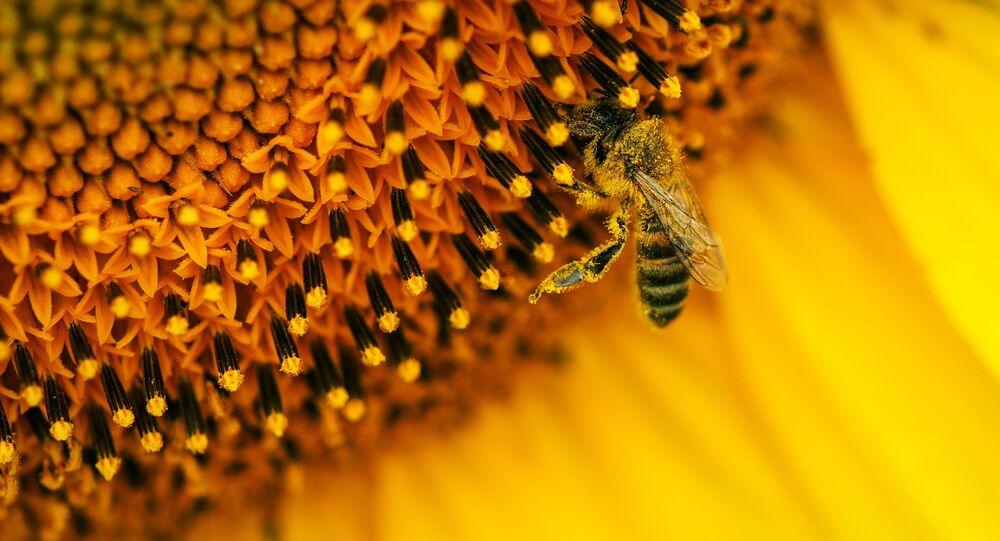 Des millions d'abeilles meurent au Mexique en quelques années