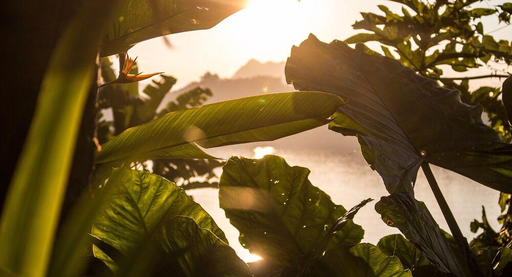 Des plantes (images d'illustration)