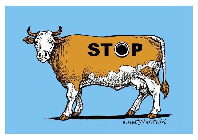 Bien-être animal: les images choquantes des vaches «à hublot»