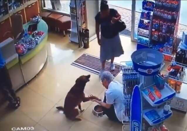 Un chien à la patte blessée entre dans une pharmacie pour chercher de l'aide