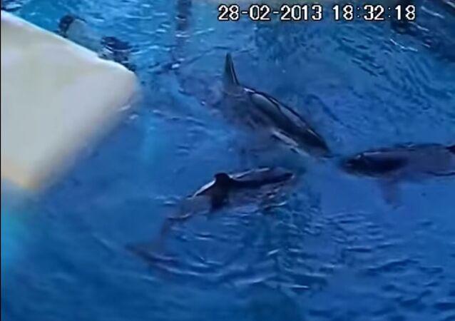 Des orques