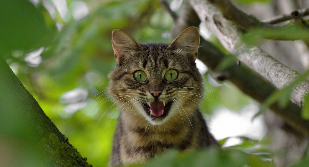 Un chat (image d'illustration)