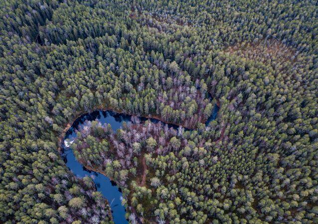 Une forêt