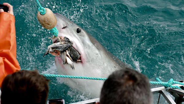 un grand requin blanc - Sputnik France