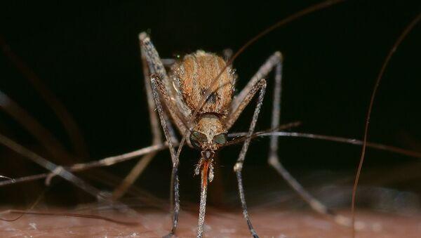 moustique - Sputnik France