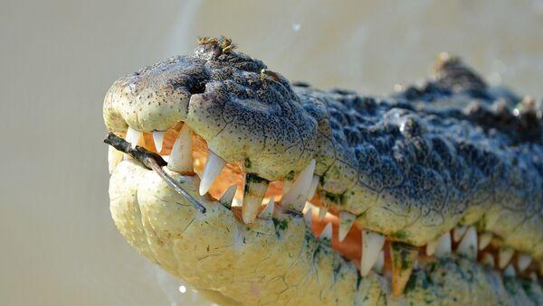 le crocodile - Sputnik France