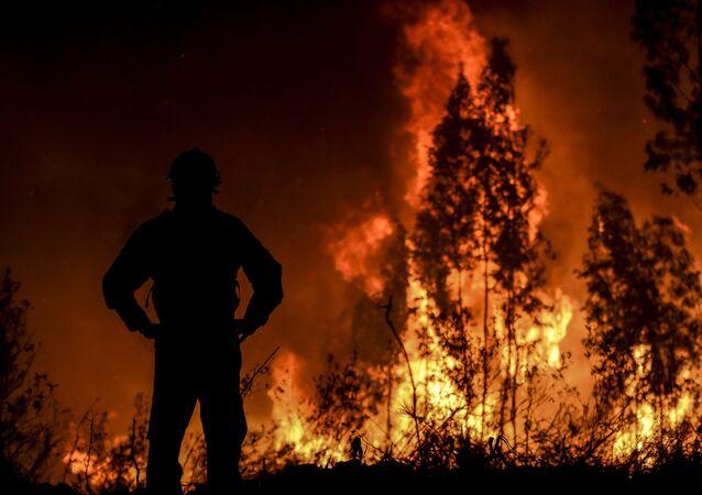 Un feu de forêt 2019