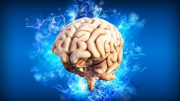 Le cerveau (image d'illustration) - Sputnik France