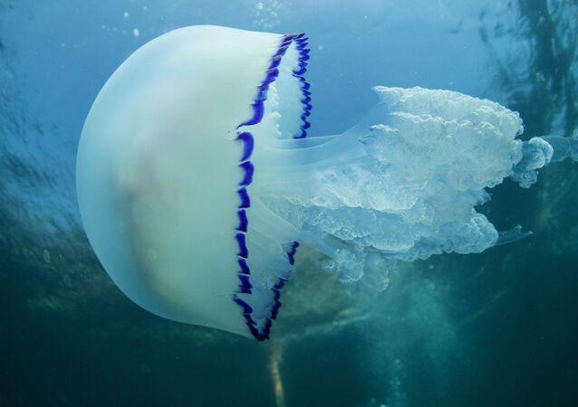 une méduse